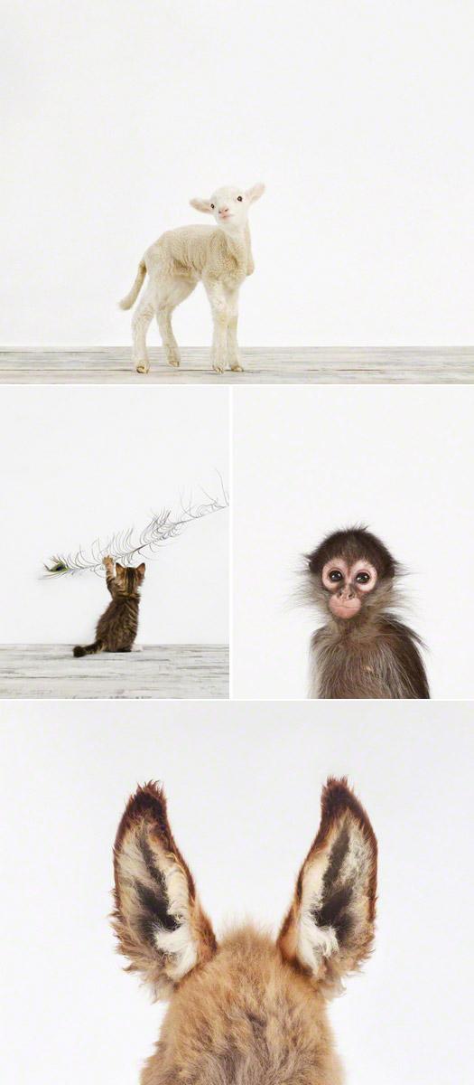 Sharon_Montrose_animalprint