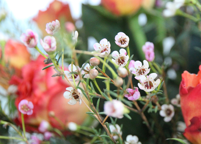 bloomydays_2