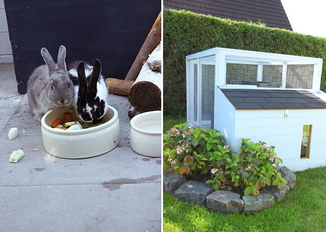 kaninchenstall_DIY_2