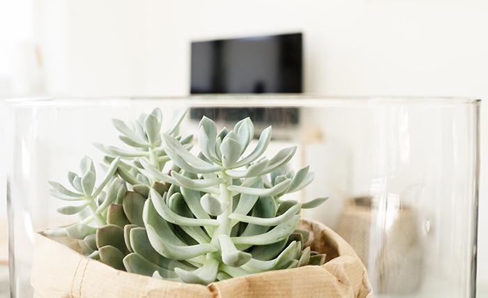 von der perfekten ecke im wohnzimmer und dem plan ein jahr keine deko zu kaufen. Black Bedroom Furniture Sets. Home Design Ideas